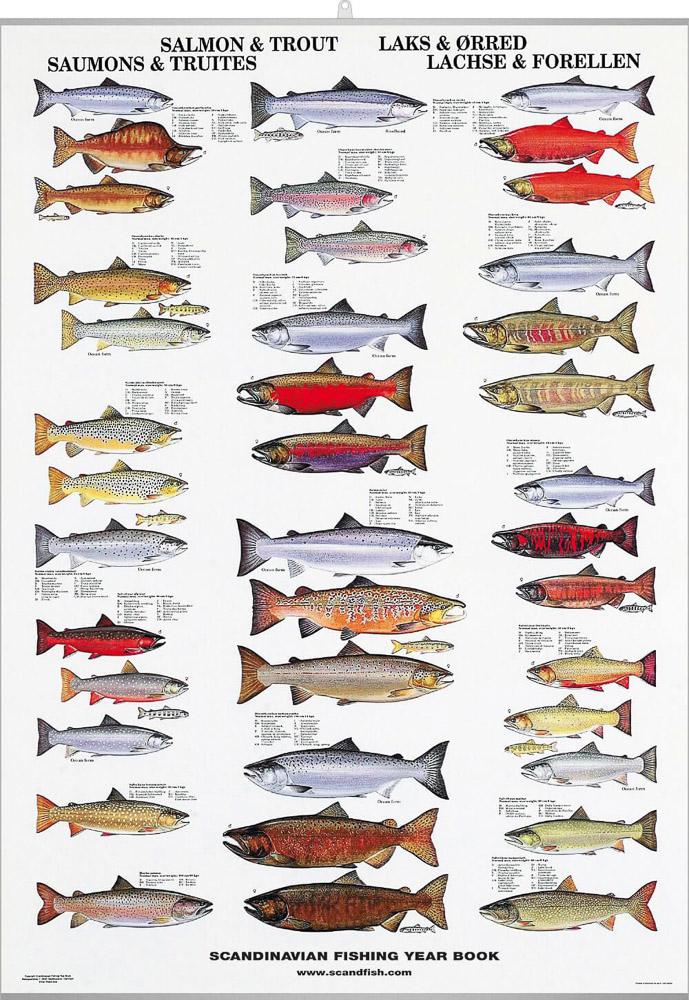saltvannsfisk norge