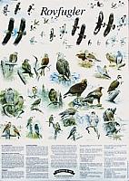 Rovfugler