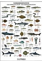 Norskekysten, fisk, skalldyr og hval