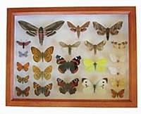 Insektkasse brun XL
