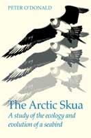 The Arctic Skua