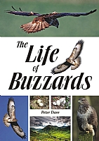 The Life of Buzzards