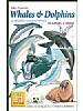 Hvaler og delfiner - Whales & Dolphins