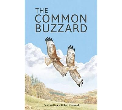 The Common Buzzard