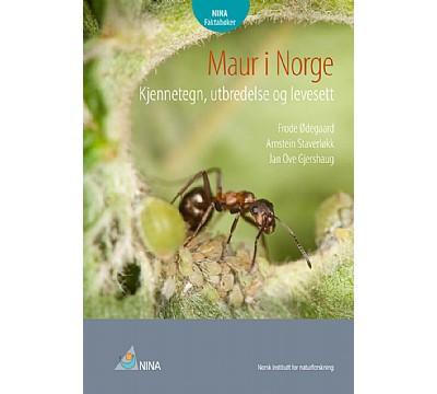 Maur i Norge