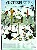 Vinterfugler ved foringsbrettet