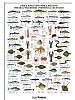 Fisk og skalldyr i Atlantern