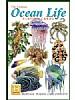 Livet i havet - Ocean life