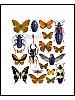 Insektsmiks, orange og lilla