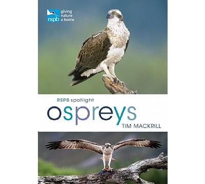 RSPB Spotlight: Ospreys