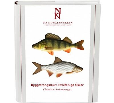Ryggsträngsdjur: Strålfeniga fiskar