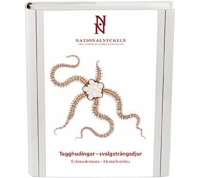 Tagghudingar–svalgsträngsdjur. Echinodermata–Hemichordata
