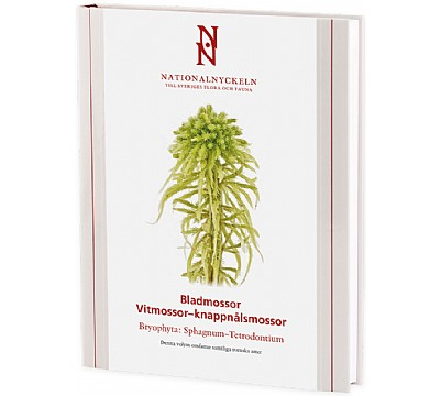 Bladmossor: Vitmossor – knappnålsmossor: Bryophyta: Sphagnum–Tetrodontium